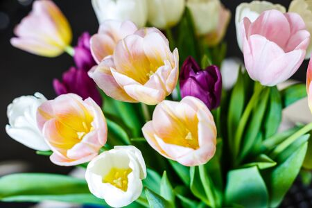 spring flowers banner, bunch of yellow and purple tulip flowers Stock Photo