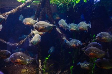 Little colorful fish, bright coral reef in aquarium. Underwater life.