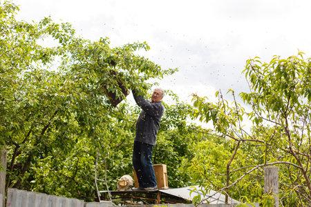 catching the bee swarm beekeeping