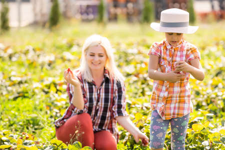 Beautiful young caucasian mother with her daughter pick strawberries in the field Banque d'images