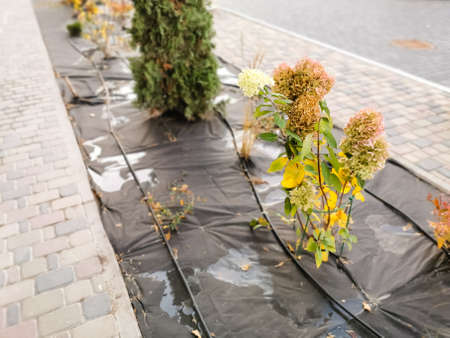 Many plants in the park are covered with special material, preparing plants for wintering, protecting the environment