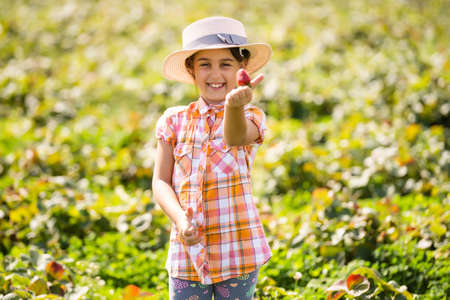 little girl picking strawberries in the field