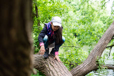 little girl with plaits is climbing on a tree