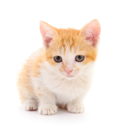 Small red kitten on a white background Stock Photo