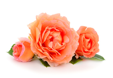 Beautiful bouquet of pink rose flowers isolated on white background. 版權商用圖片