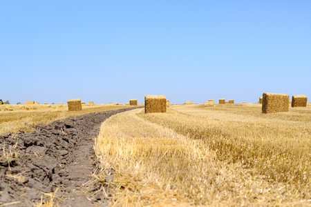 Bales of straw field after harvest of wheat.