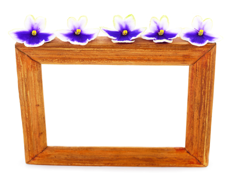 Saintpaulia (African violets) and wooden frame isolated on white background. Stock Photo