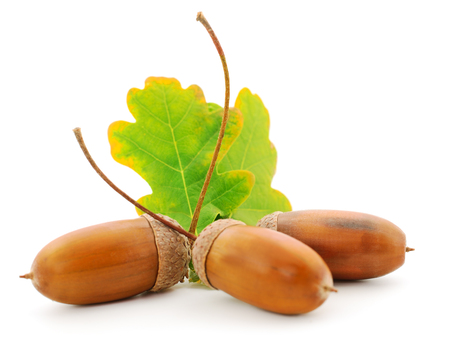 Autumn leaves and acorns in a basket, isolated on a white background.