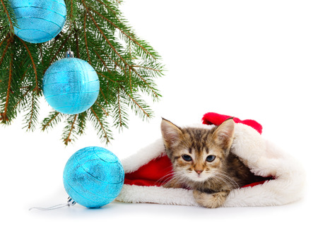 Little kitten with Christmas decorations isolated on white Stock Photo