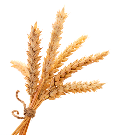 Ripe ears of wheat isolated on white background. Standard-Bild - 121975092