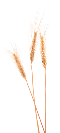 Ears of barley isolated on white. Background. Studio shot. Standard-Bild - 122800078