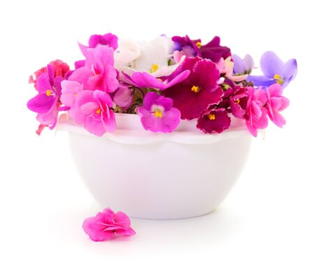Saintpaulia African violets in basket isolated on white background.