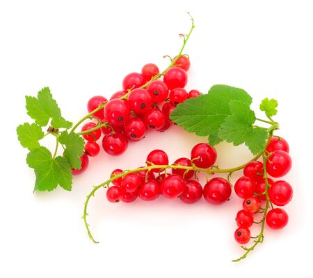 Red currant fruit with leaf sprigs  isolated over white background.