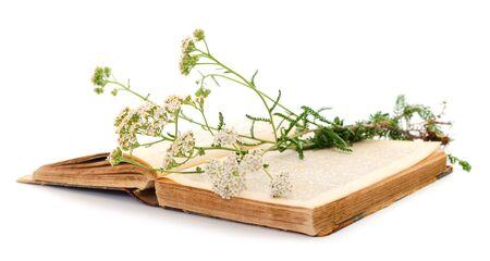 Yarrow (Achillea millefolium) isolated on white background.
