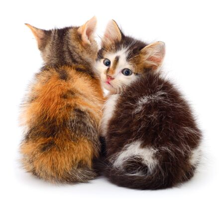 Two small kittens isolated on a white background. 写真素材