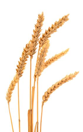 Ripe ears of wheat isolated on white background. Stockfoto