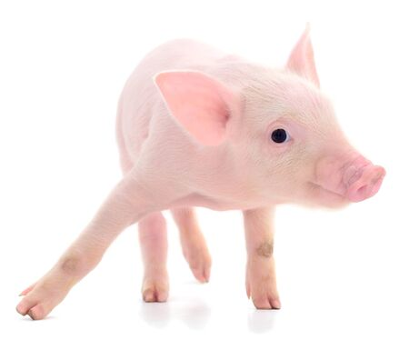 Small pink pig who is isolated on white background. Foto de archivo - 134867565