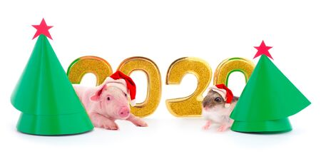 Christmas card with two New Year trees and 2020 figure and adorable guinea pig and pig in Santa's red hat isolated on white background.