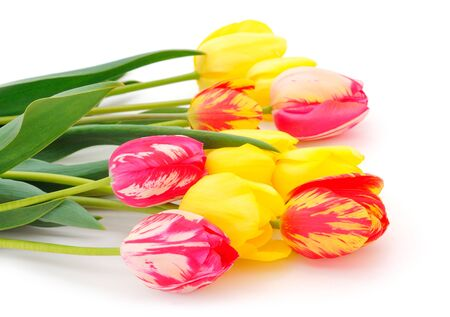 Colorful bouquet of tulips on white background. Spring background.