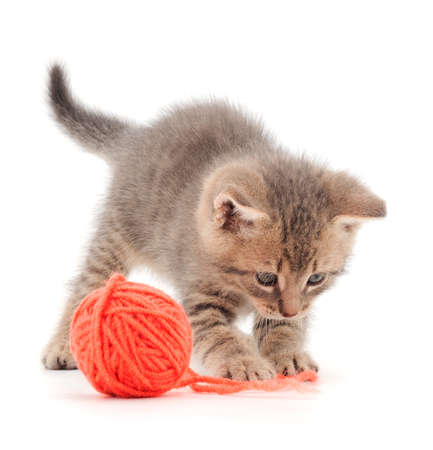 Little kitten playing with a ball of yarn isolated on white background. 版權商用圖片