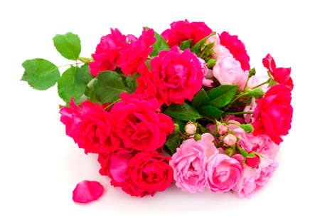 Bouquet of red and pink roses isolated on white background. Imagens