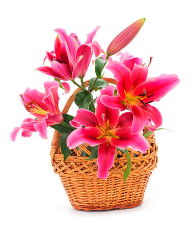 Bouquet of red lilies in a basket isolated on white backgraund. Banque d'images