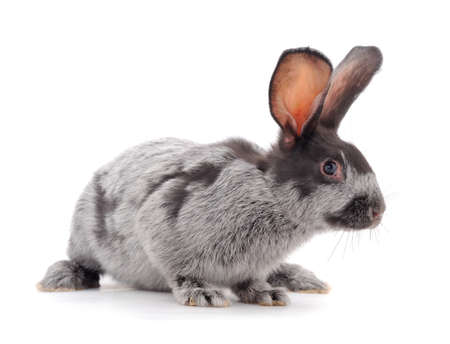 Gray rabbit isolated on a white background. Banque d'images