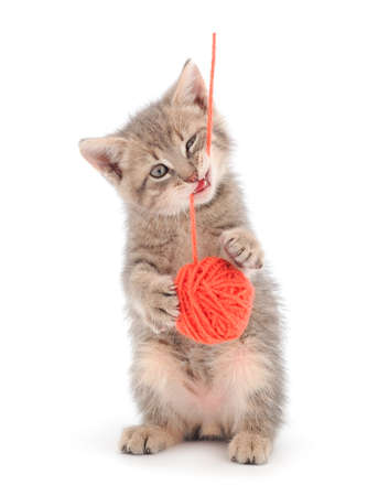 Little kitten playing with a ball of yarn isolated on white background. Banque d'images