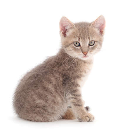 Small gray kitten on a white background. Banque d'images
