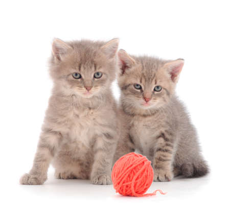 Two kittens with ball of yarn isolated on white background. Banque d'images