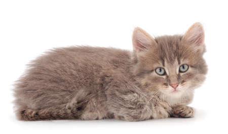 Little gray kitten lies on a white background.