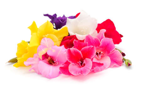 Beautiful gladiolus flowers isolated on white background.Blank of congratulatory card. Banque d'images