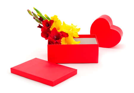 Red gift box and gladiolus flowers isolated on white color background. Blank of congratulatory card. Banque d'images