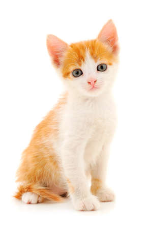 Small red kitten on a white background.