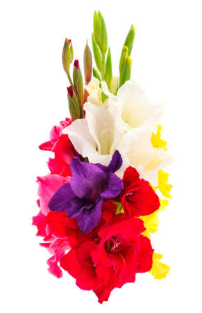 Beautifu bouquet gladiolus flowers isolated on white background.Blank of congratulatory card. Banque d'images