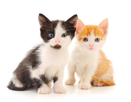 Two small kitten on a white background.