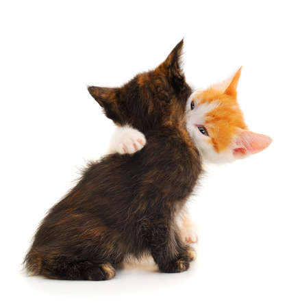 Two little kittens playing isolated on white background.