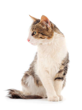 Beautiful young house cat on a white background.