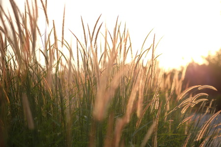 field of grass during sunlight, sunset, set rise in countryside photo