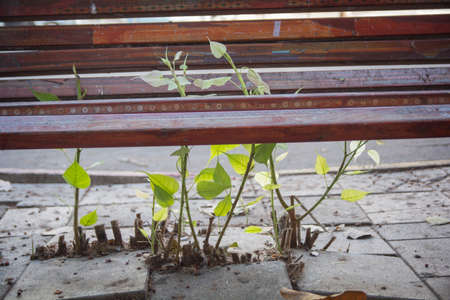 Nature is thriving during Covid-19 lockdown: A plant grows through a street bench
