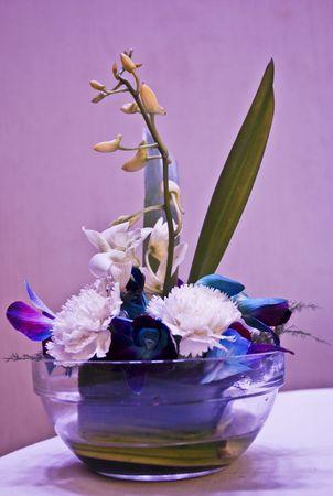 Flower Stock Photo - 7972014