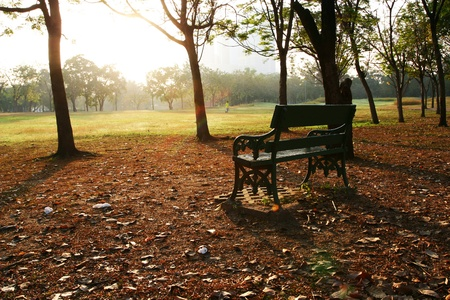 Park Bench with Trees and Grasses on the Sunrise time