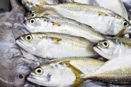 A group of mackerel, Bangkok Thailand