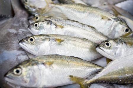 A group of mackerel, Bangkok Thailand photo