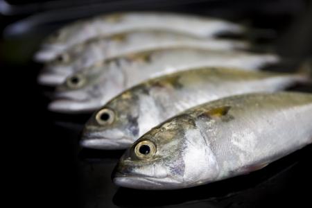 A group of mackerel on black background, Bangkok Thailand photo