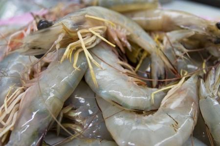 Close up raw shrimp