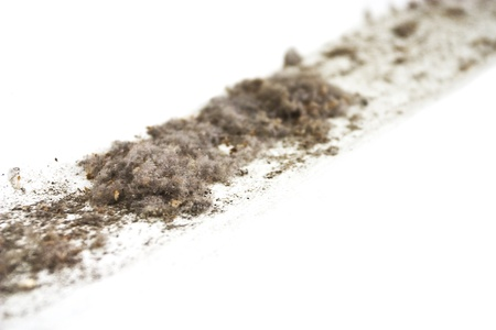 A group of dust with dessicated ants photo