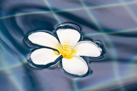 Plumeria Flower on water surface