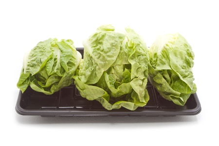 Baby Salad Group on Black Plastic Tray isolated on white