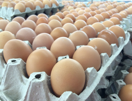 Eggs in carton box in warehouse Stock Photo